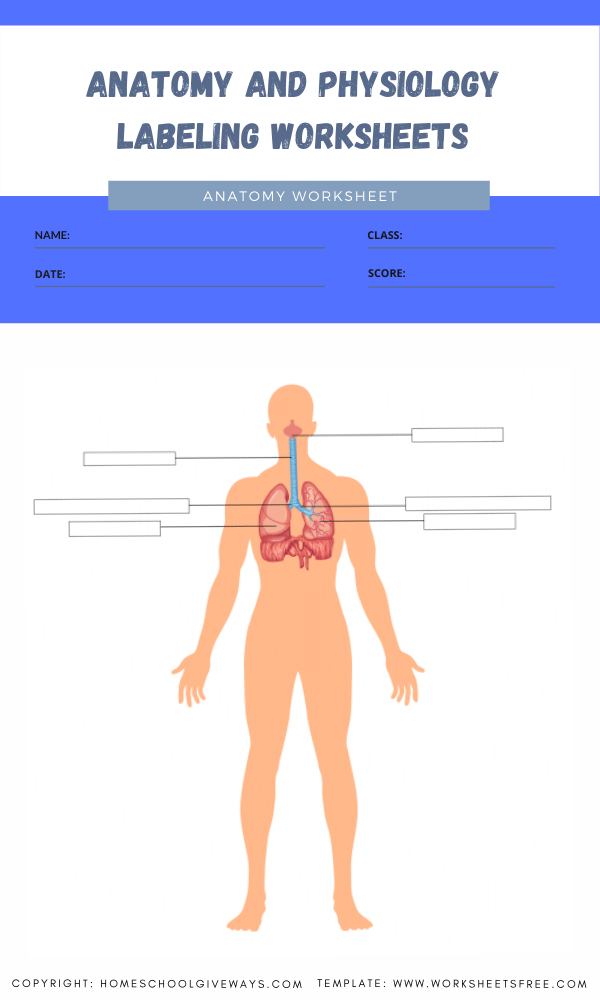anatomy and physiology labeling worksheets 8