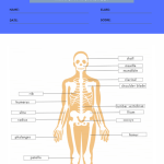 anatomy and physiology labeling worksheets 9