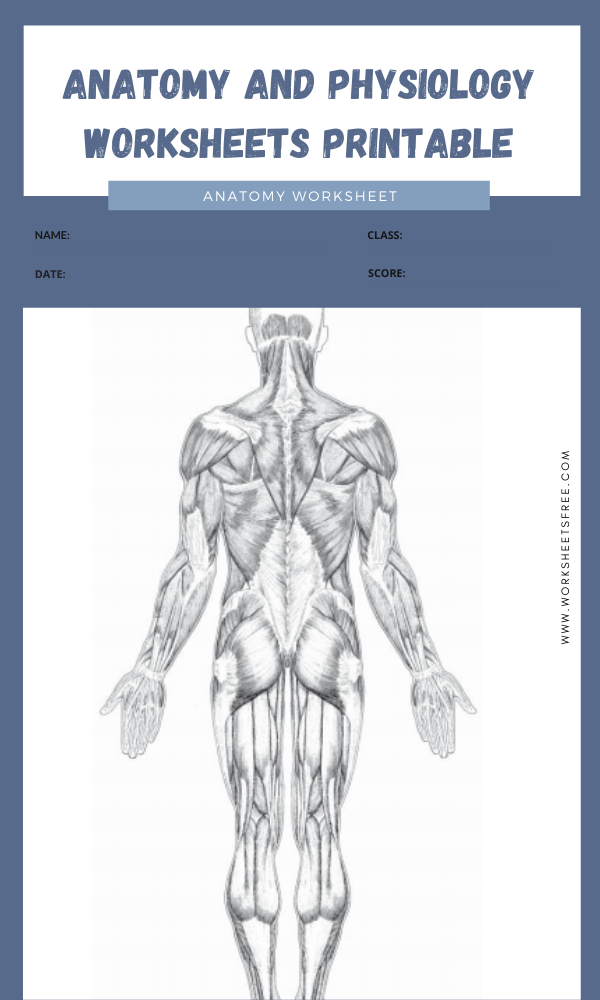 anatomy and physiology worksheets printable 2