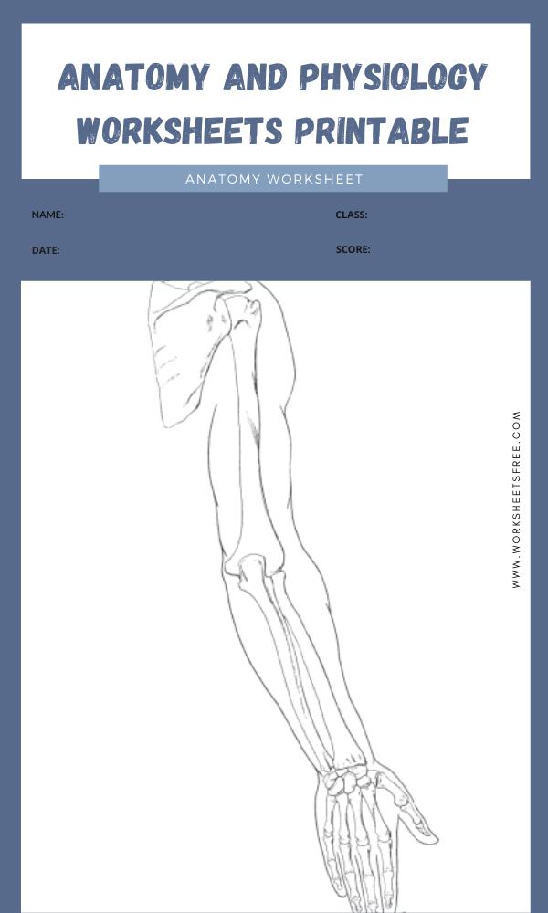 anatomy and physiology worksheets printable 7