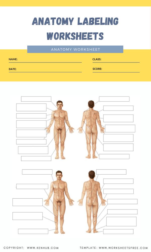 anatomy labeling worksheets 2