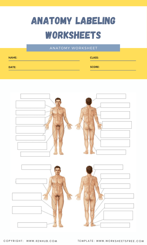 anatomy labeling worksheets 2