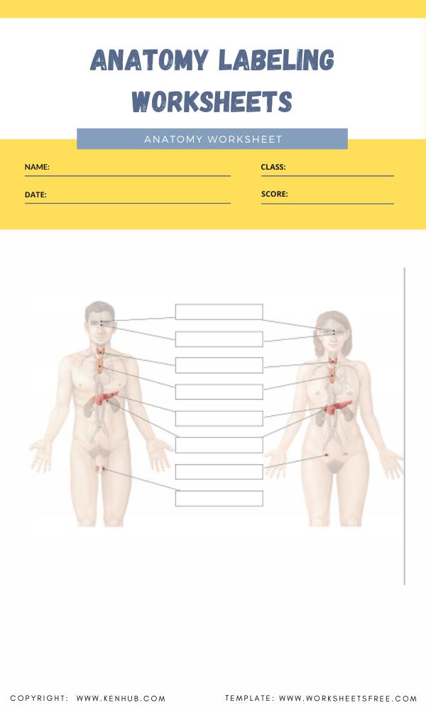 anatomy labeling worksheets 4