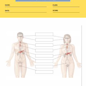 anatomy labeling worksheets 4