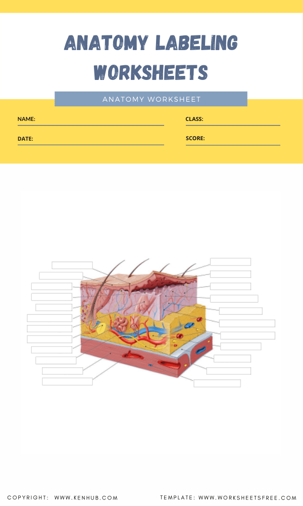 anatomy labeling worksheets 6