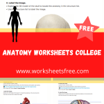 anatomy worksheets college