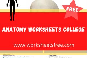 anatomy worksheets college