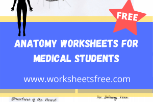 anatomy worksheets for medical students
