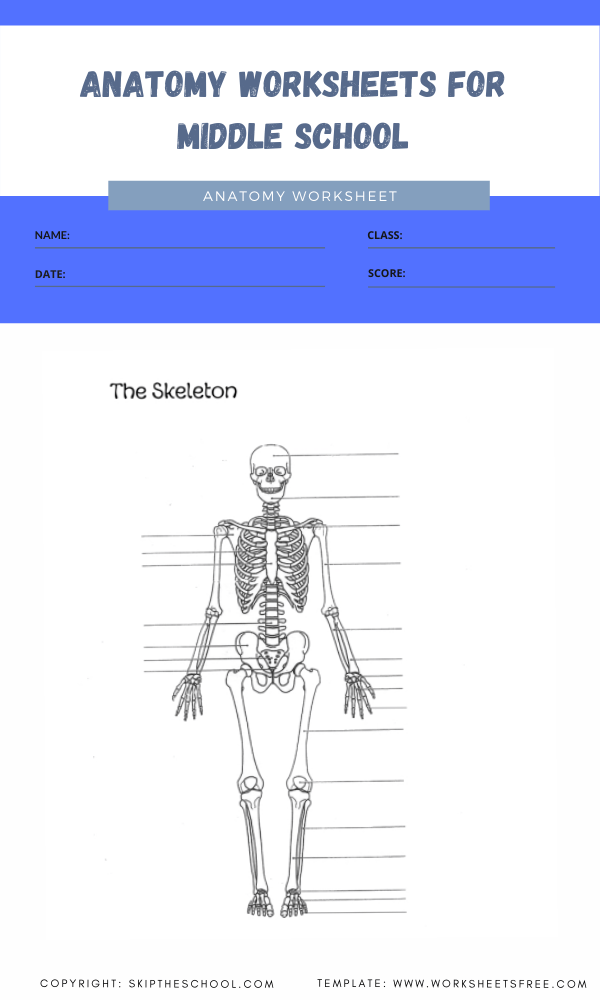 anatomy worksheets for middle school 1