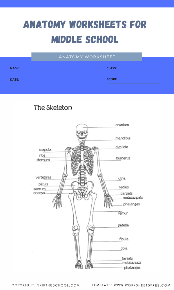 anatomy worksheets for middle school 2