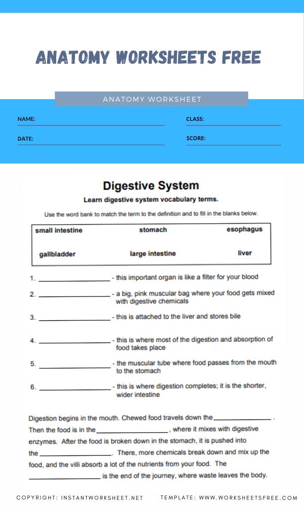 anatomy worksheets free 3