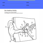 ear anatomy worksheets 1