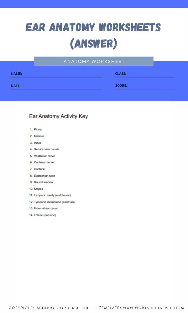 ear anatomy worksheets 2