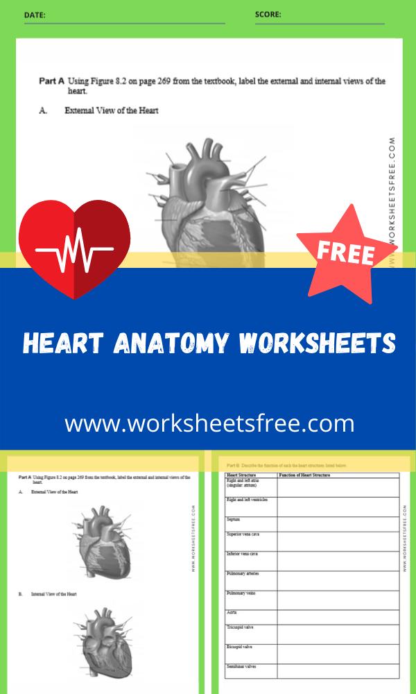 heart anatomy worksheets