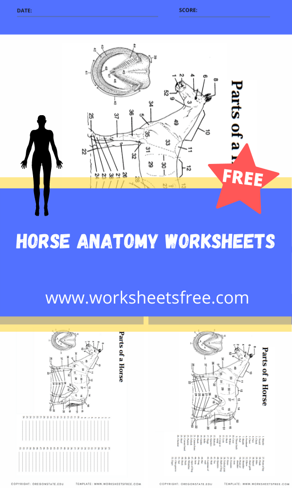 horse anatomy worksheets