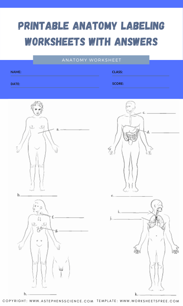 printable anatomy labeling worksheets with answers 7