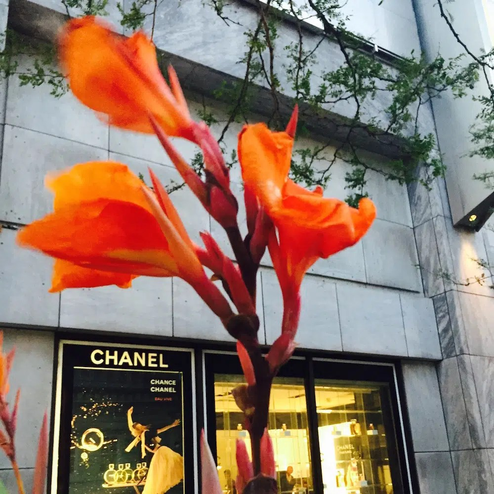 Chanel and flower