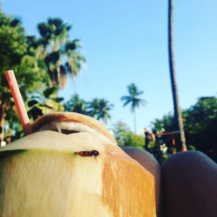 Coconuts in the park