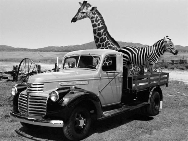 Vintage Work Trucks Shown at Car Museum - Top News ...