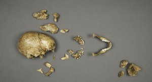 The 17th-century remains of 'Jane', a 14-year-old girl who died at Jamestown and was cannibalised by her desperate fellow-settlers. Image: Don Hurlbert, Smithsonian