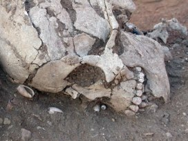 Neolithic skull with remains of pearl jewellery