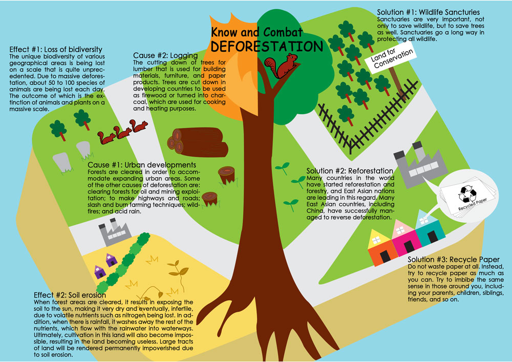 info3 - 5 simple ways to fight deforestation