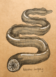 Asterean Lamprey by TJ Trewin