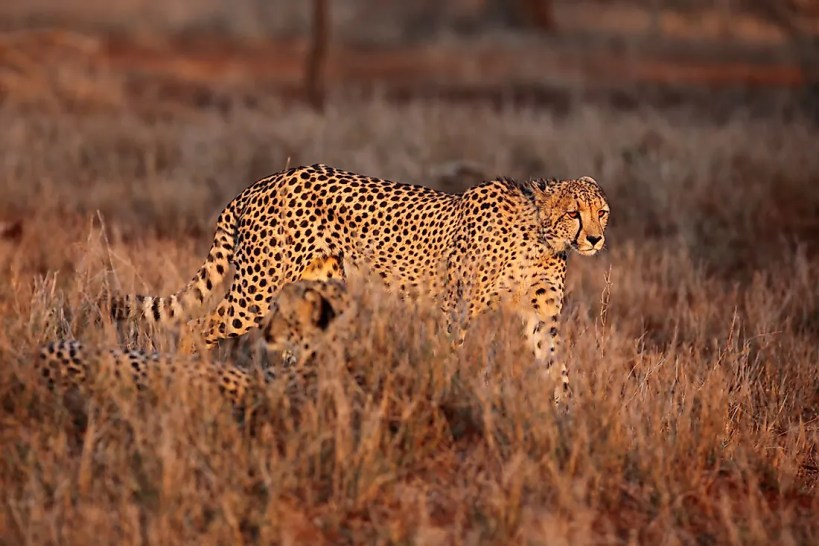 Native African Animals
