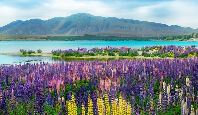 #9 New Zealand