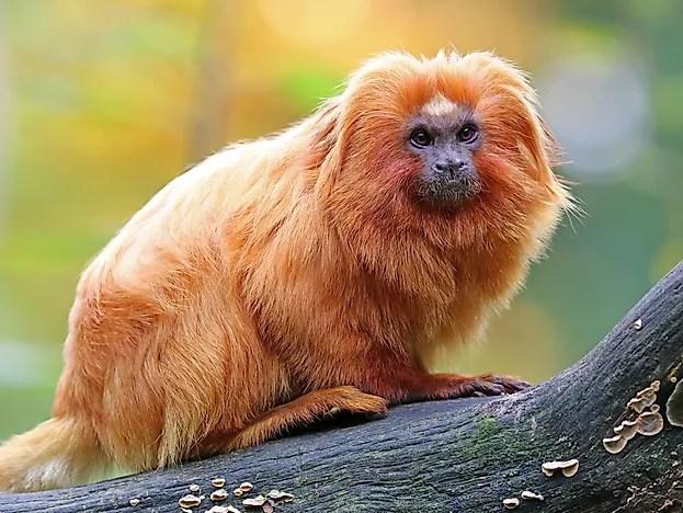 Animals Live Near Amazon Rainforest