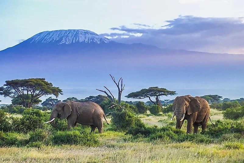 # 6 elefantes africanos