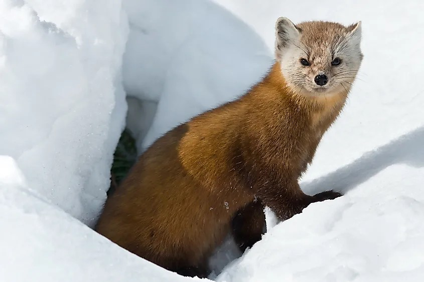 Check out these insanely cute videos of kids & animals on countryliving.com What Animals Live In The Taiga Worldatlas