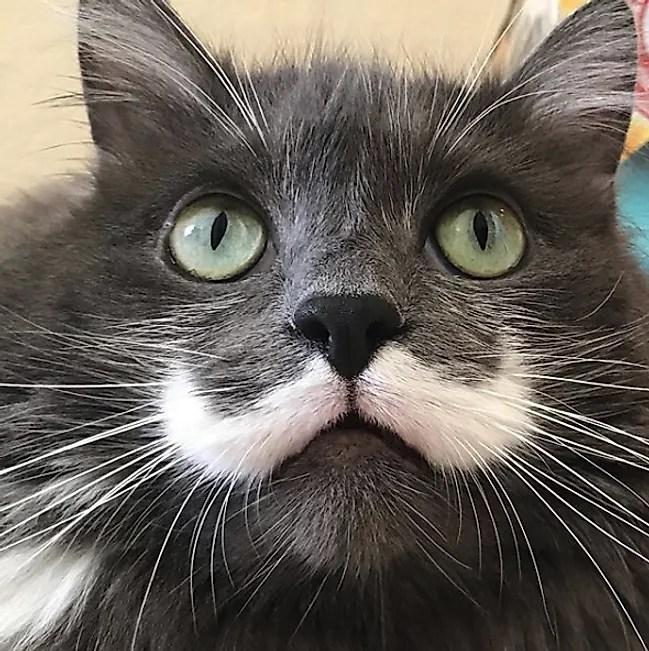 @hamilton_the_hipster_cat Instagram