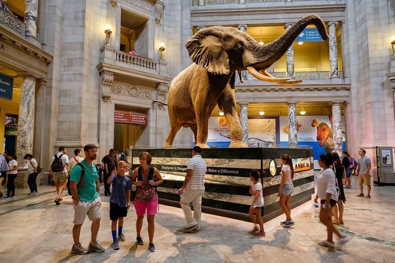 Washington DC'deki Ulusal Doğa Tarihi Müzesi Ana Salonundaki ziyaretçiler Resim kredisi: Kamira / Shutterstock.com