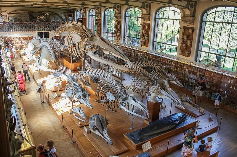 Dünyanın En İyi Doğal Tarih Müzeleri Doğa Tarihi Müzesi, Paris.  Görsel hakları: Shadowgate, Novara, İTALYA / Wikimedia.org