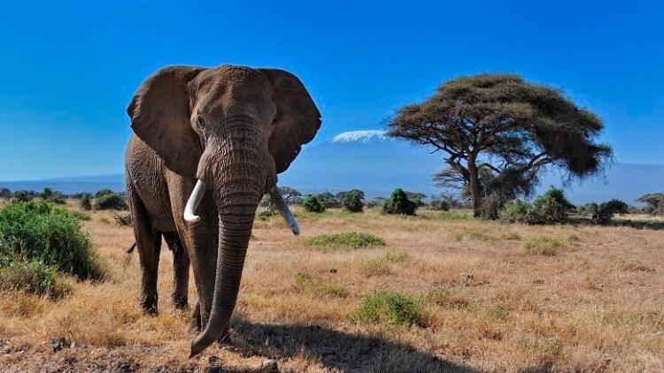 https://i1.wp.com/www.worldbank.org/content/dam/Worldbank/Highlights%20&%20Features/environment/Kenya%20Elephant%20in%20Amboseli%20National%20Park%20Photo%20by%20diana_robinson%20Flickr%20780x439.jpg?w=750