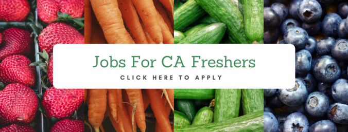 jobs for ca freshers