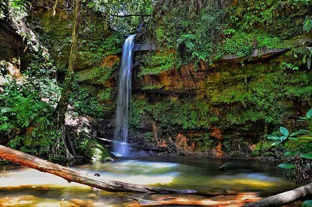 Lambir Hills National Park Miri