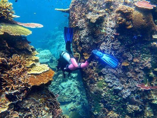 Batu Malang Pulau Tioman Main Image