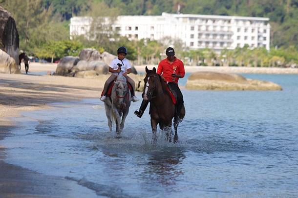 Island Horses Langkawi Image