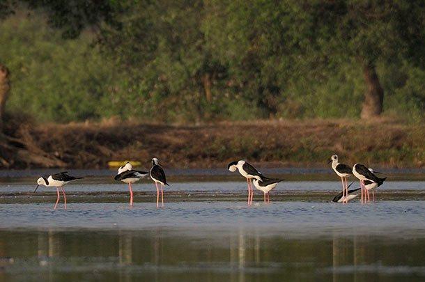 Mangrove Wonorejo