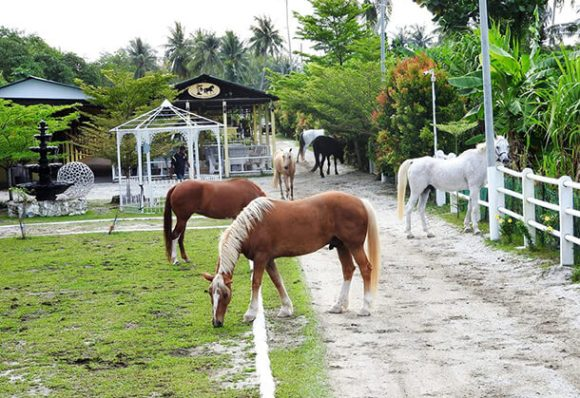 Country Side Stables