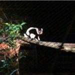 melaka-zoo-night-safari-08