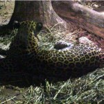 melaka-zoo-night-safari-09
