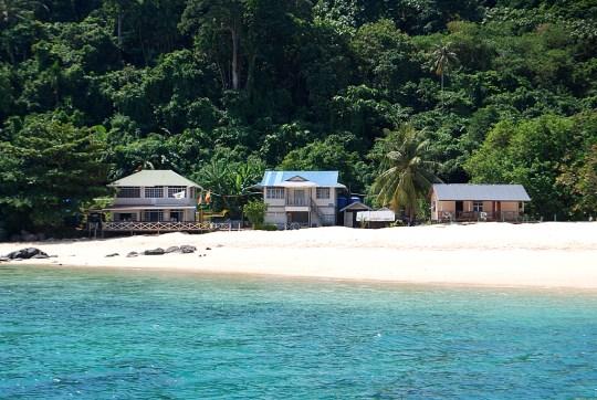 turtle-volunteering-talang-island-4