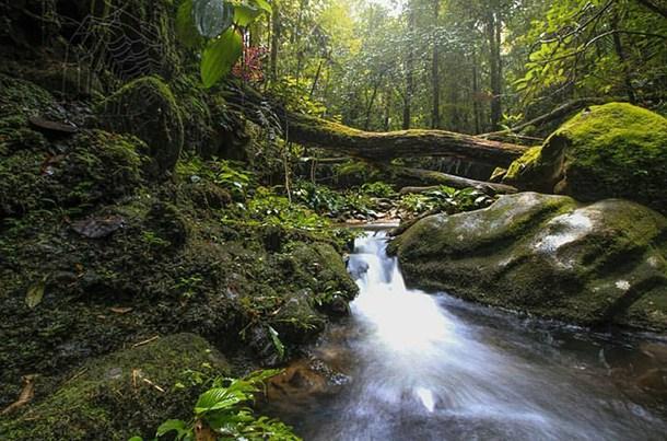 Taman Kinabalu