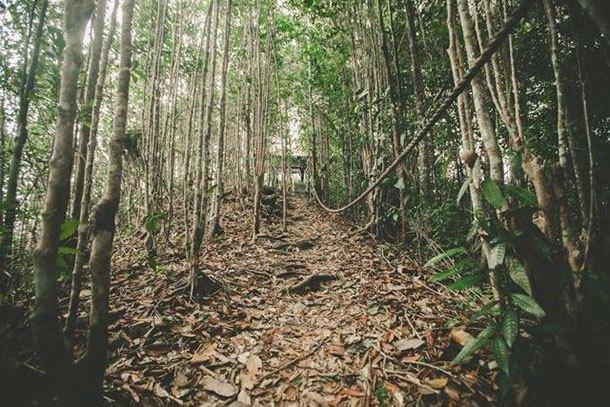 Hutan Lipur Gunung Arong Mersing