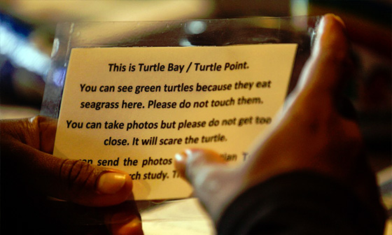 turtle-project-1