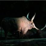 melaka-zoo-night-safari-03