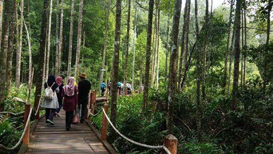 Matang Mangrove Forest Reserve